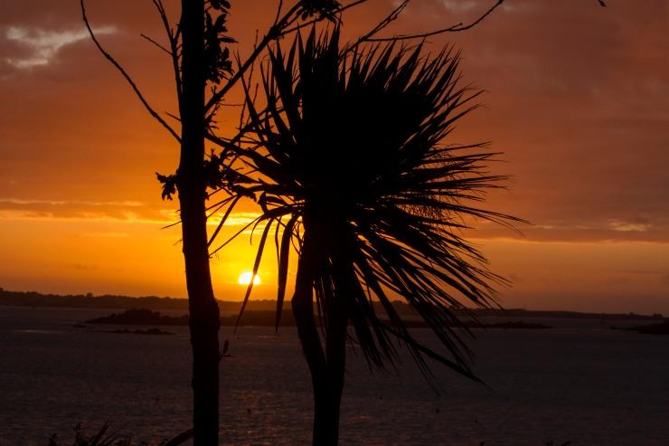 Jon & Sue Sunset Tree