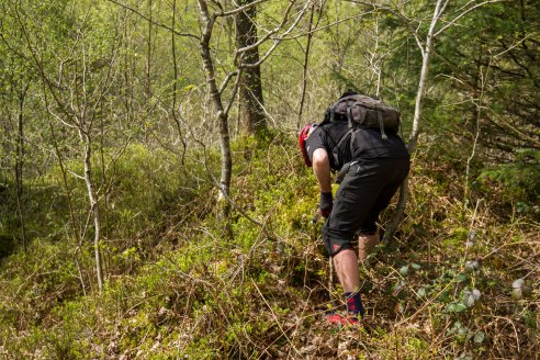 TFT Grizedale 19